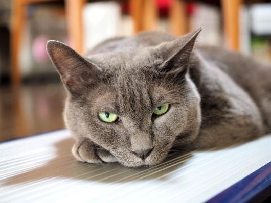 アルミボードの上の猫