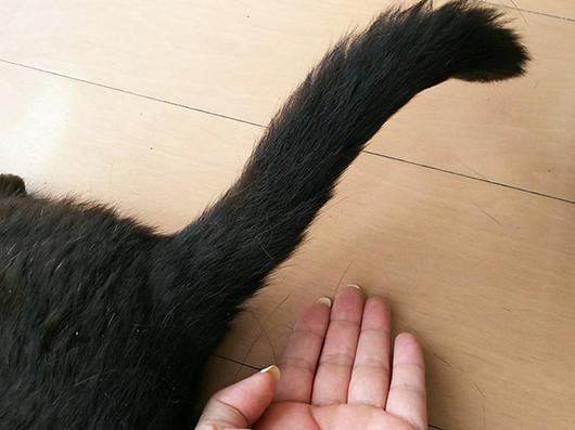 黒猫のしっぽ