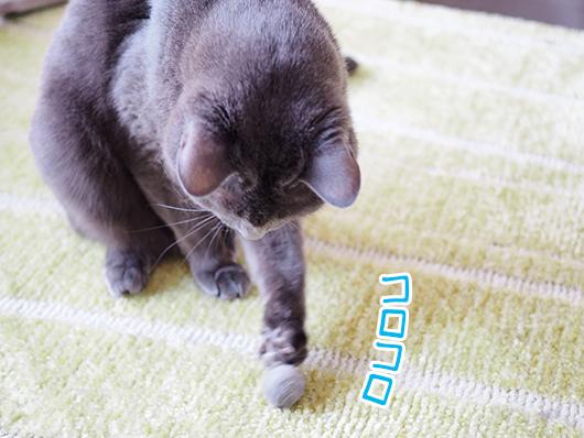毛玉で遊ぶ猫