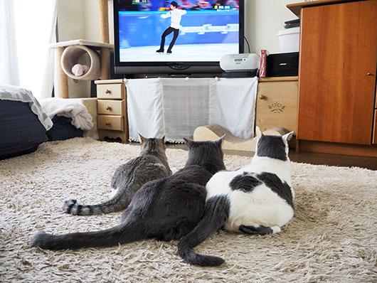 オリンピック観戦する猫