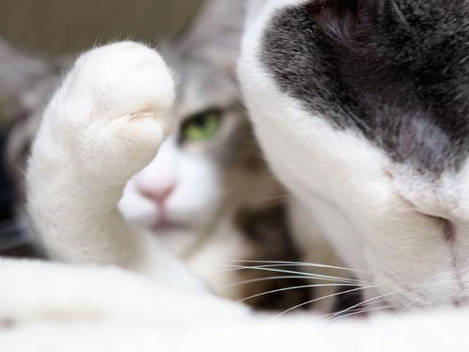 怖い目つきの猫