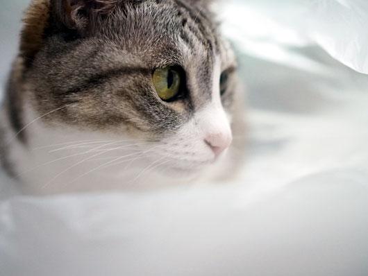 ゴミ袋に入る猫