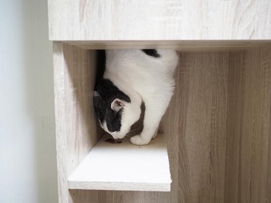 逆立ちする猫