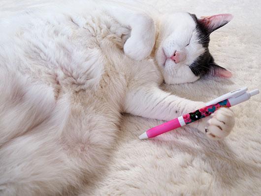 ペンを持つ猫