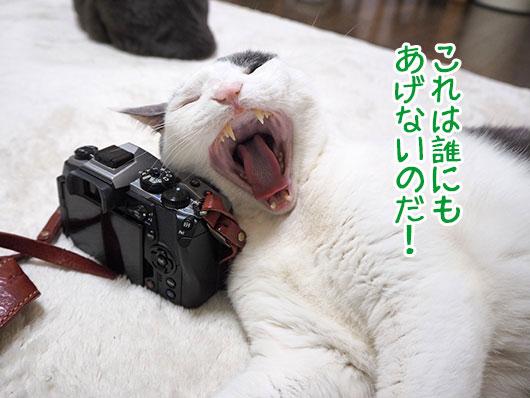 カメラを枕にする猫