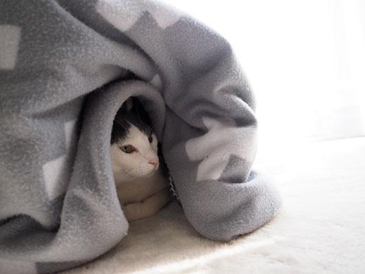 コタツの中の猫