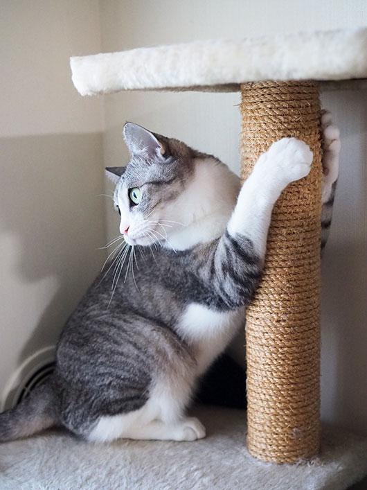 爪を砥ぐ猫