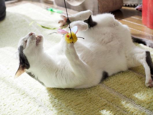 ハッスルする猫