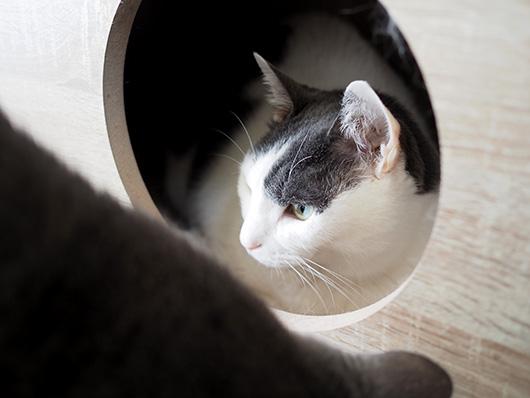 引きこもり猫
