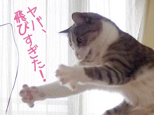 飛びすぎた猫