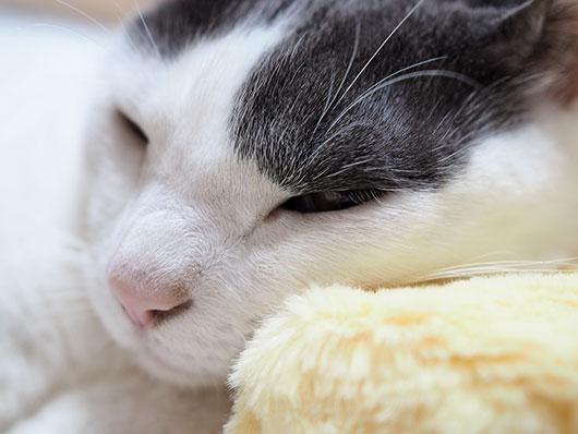 ボックスティッシュを枕にする猫