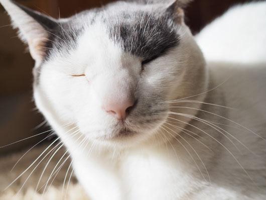 ぬぼ~とした猫