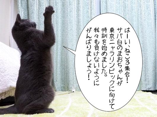 号令をかける猫