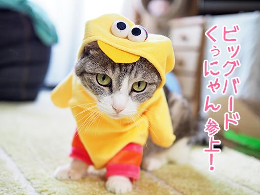 ビッグバードの猫
