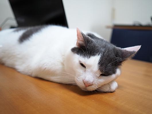 テーブルで眠る猫