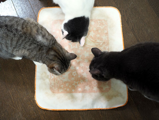 またたびに集まる猫