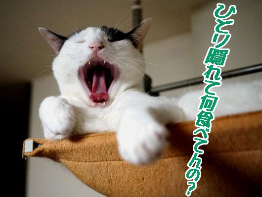 恨めしそうな猫