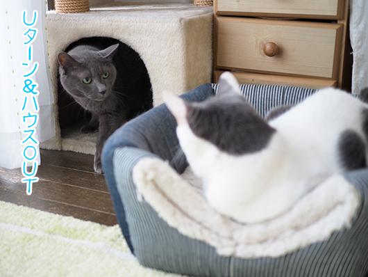 キャットハウスと猫