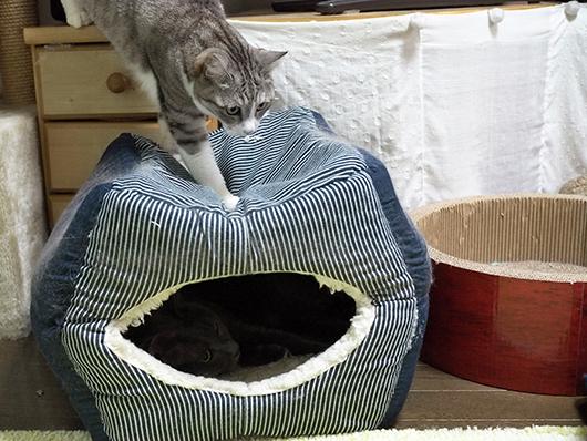 キャットハウスに乗る猫