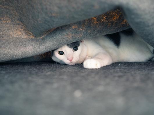 カーペットの下の猫
