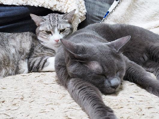 ぴっとりくっついている猫
