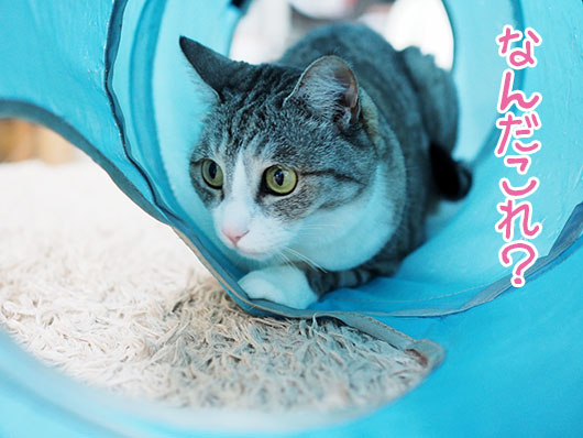 トンネルの中の猫