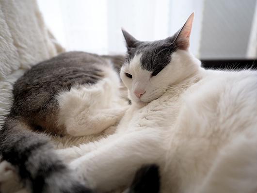 寝ぼけた猫