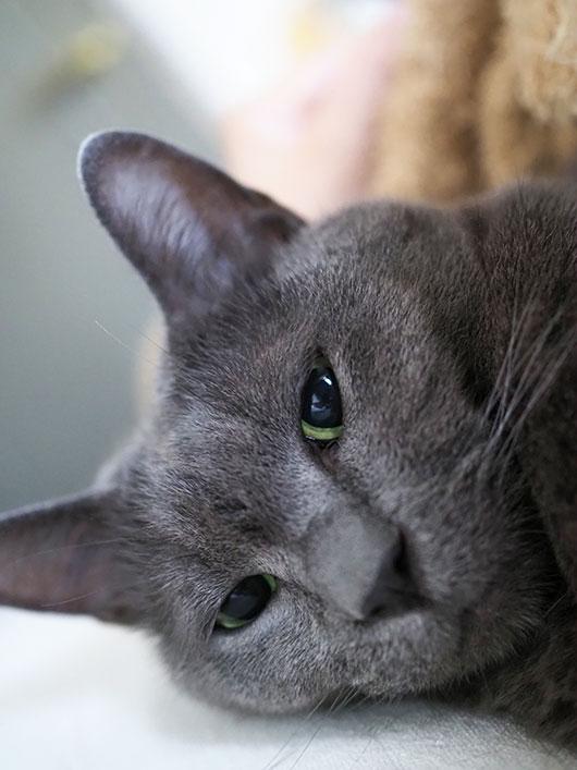 眠気眼の猫