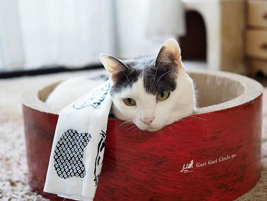 爪とぎサークルの中の猫