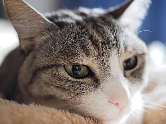まどろむ猫