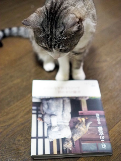 岩合光昭写真集を眺める猫