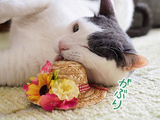 帽子をかじる猫