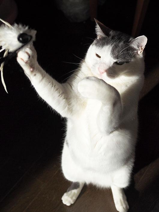 トレーニング中の猫