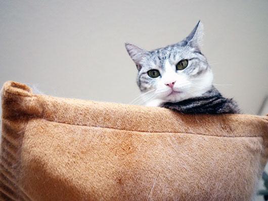 見下ろす猫