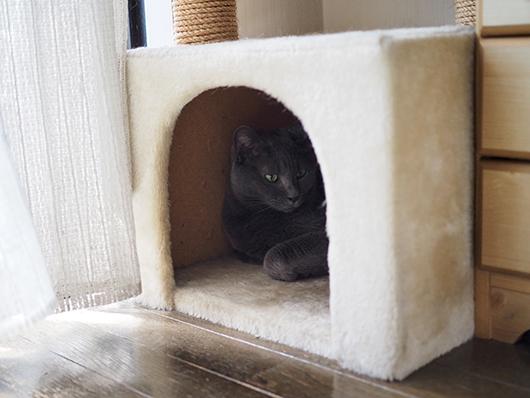 キャットハウスの猫