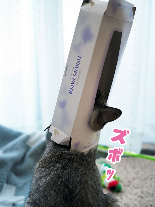 ティッシュボックスにハマった猫
