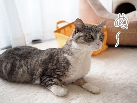 首が伸びた猫