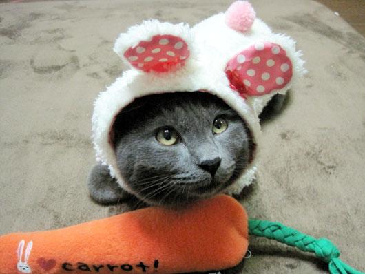 コスプレする猫