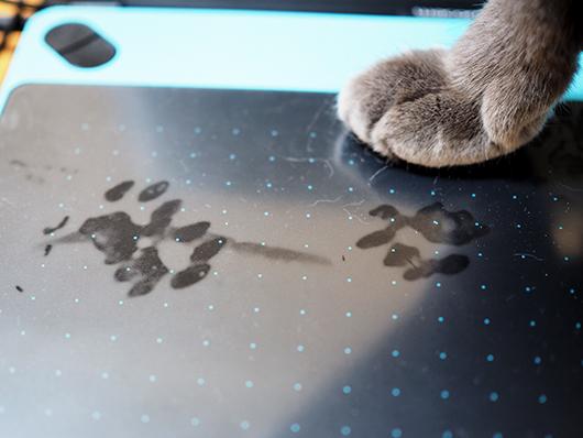 足跡をつけた猫