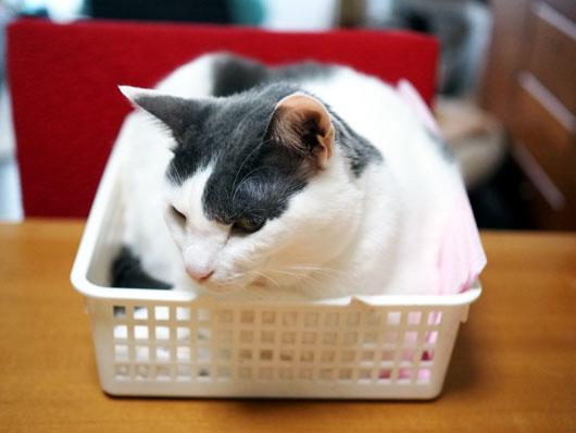 かごの中の猫
