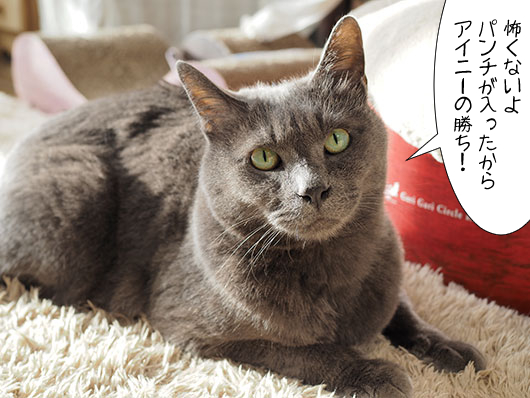 ケンカした猫