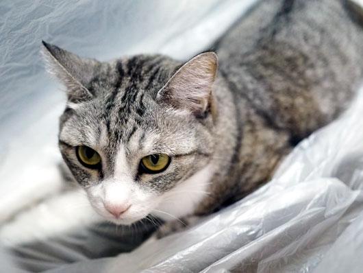ゴミ袋の中の猫