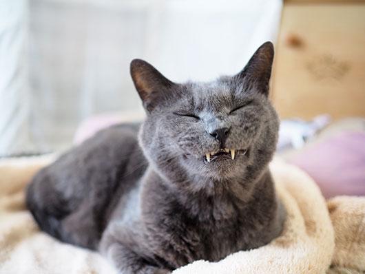 あくびをした猫
