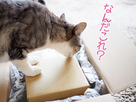 箱を気にする猫