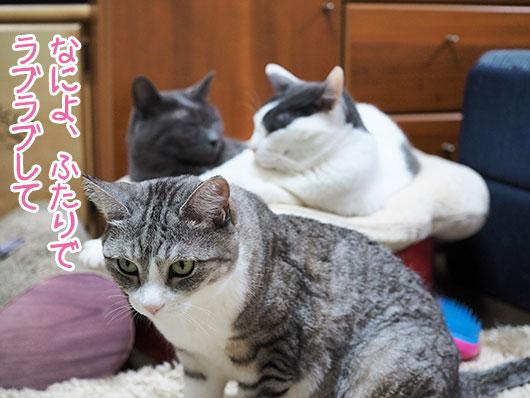 嫉妬する猫