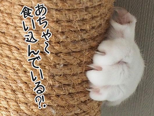 猫の伸びた爪