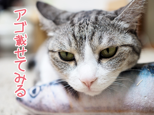 けりぐるみと猫