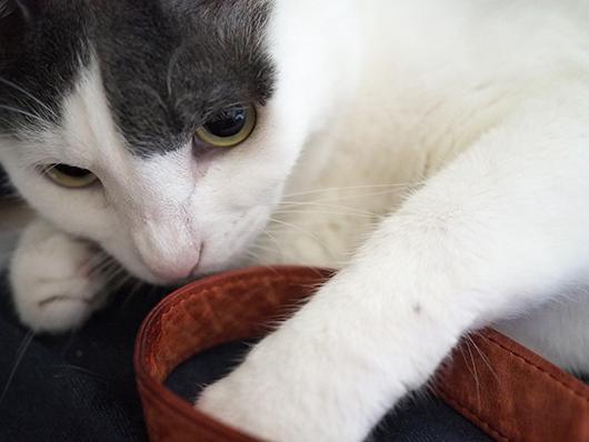猫とストラップ