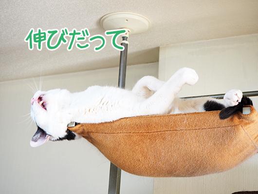 キャットウォークの頂上の猫