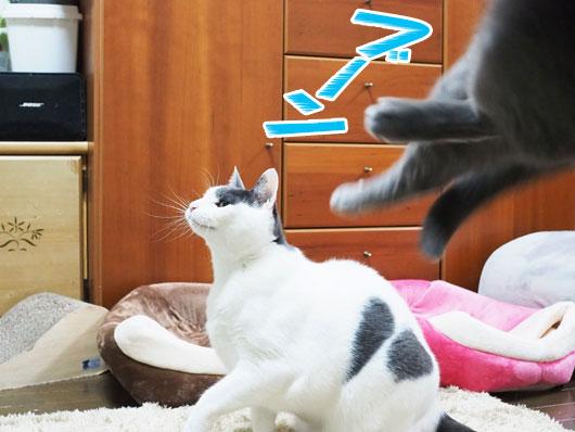 ぶっ飛んだ猫
